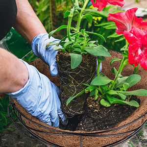 Plant Your Favorite Flowers