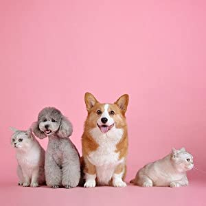 lots of pets