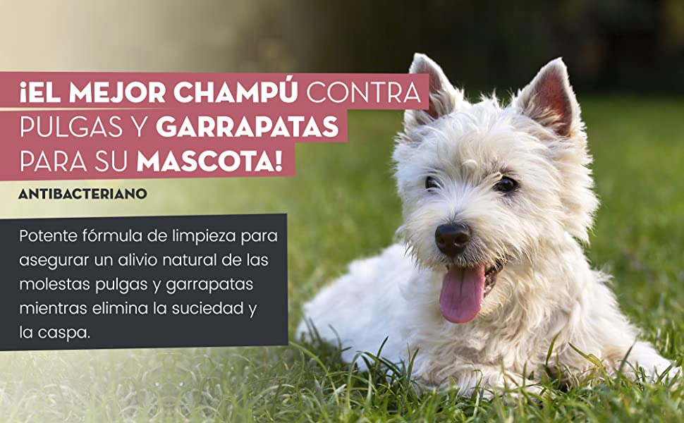 Animigo Champú Antipulgas para Perros y Gatos 500ml - Champú Natural Antiparasitario, para Ácaros, Pulgas y Garrapatas, Ideal para Pelo Seco, Elimina Picazón Mascotas, para Todo Tipo de Razas: Amazon.es: Productos para