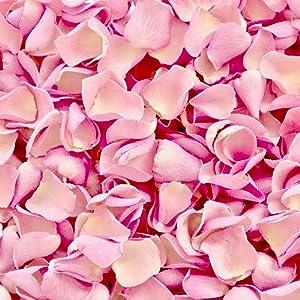 Rose Petals, Rose, Vanilla, Pink Petals, HB Botanicals Candle