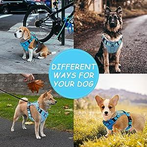 HAPPY HACHI Arnes Perro Chalecos Reflectantes Perros Pequeño Mediano Grande Ligero con Mango Nylon para Caminar Entrenamiento(S Azul): Amazon.es: Productos para mascotas
