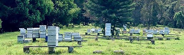 Highest Rated Medicinal Manuka Honey