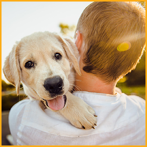 L'huile de soin pour animaux de compagnie est un moyen naturel de favoriser la santé en général