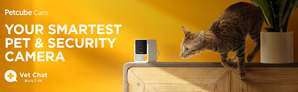 Petcube Cam pet camera and a cat