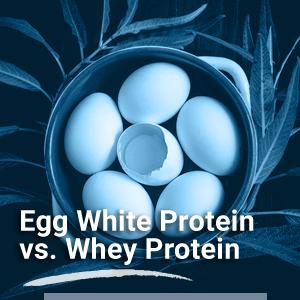 protein powder for women pea protein powder