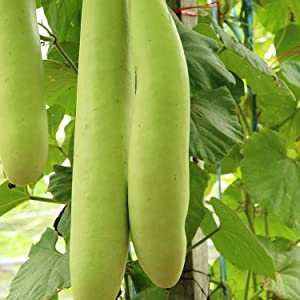 Vegetable Seeds Non-GMO, Heirloo