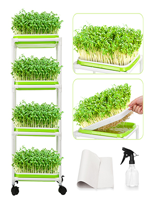 microgreens growing kit sprouts broccoli sprouting seeds seed trays seed tray sprouting tray