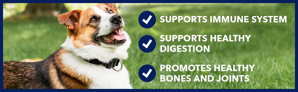 honest paws purity hemp oil showing benefits with dog immune system digestion healthy joints bones