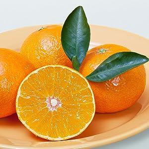 Kosmetic Immunity by JKosmmune Serum Ingredient, Citrus Unshiu