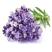 Lavender for scar removal mederma care keloid