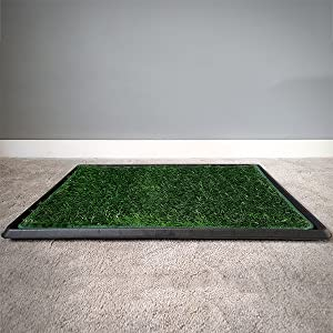 dog grass tray