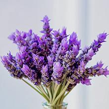 Lavender Flower Oil