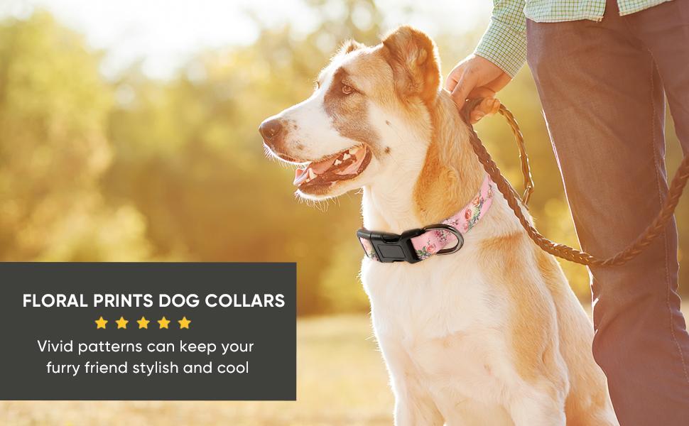 dog collar for walking