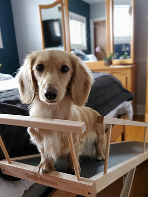 small dog bedside ramp