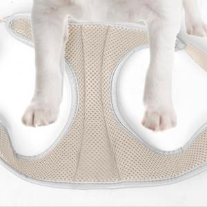 put dog's leg into harness