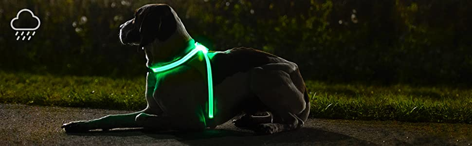 LightHound | Outdoors