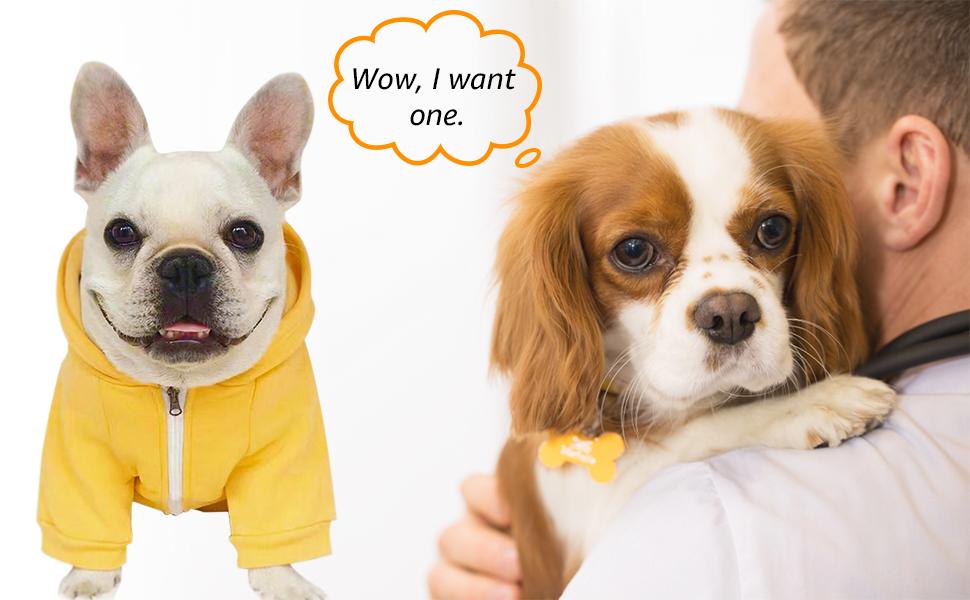 Pet dog clothes