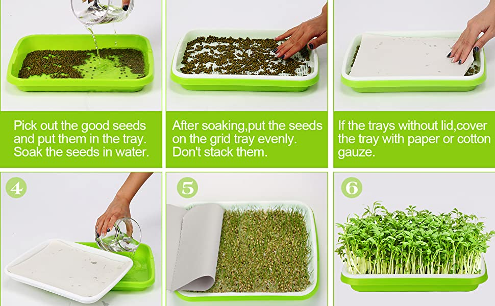 alfalfa sprouting seeds sprouting kit microgreen seeds microgreens growing kit grass sprouting tray
