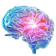 brain cognitive