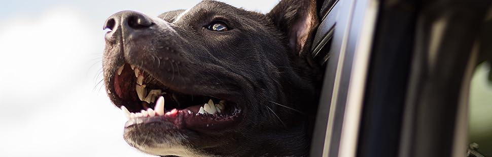 training treats that dogs love