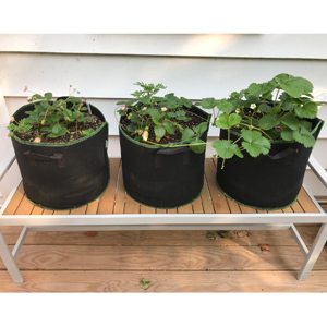 plant pots outdoor