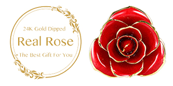 red rose with stand