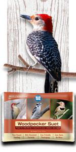 wood pecker bird suet