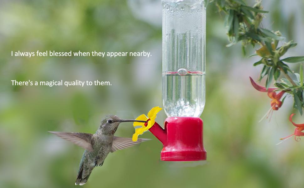 single glass hummingbird feeder