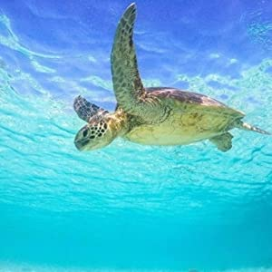 sea turtles ocean conservation save the ocean protect our seas sustainable ethical purpose cause