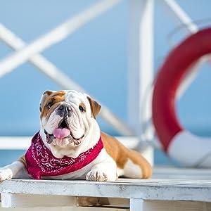 Dog Bandana, triangle bandana, bandana scarf, bandana head wrap, bandana headband, bandana headwrap