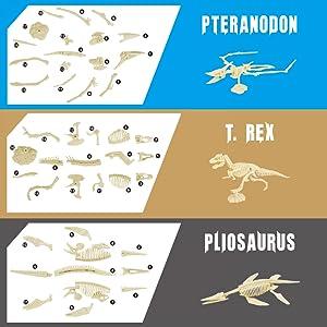3 dinosaur