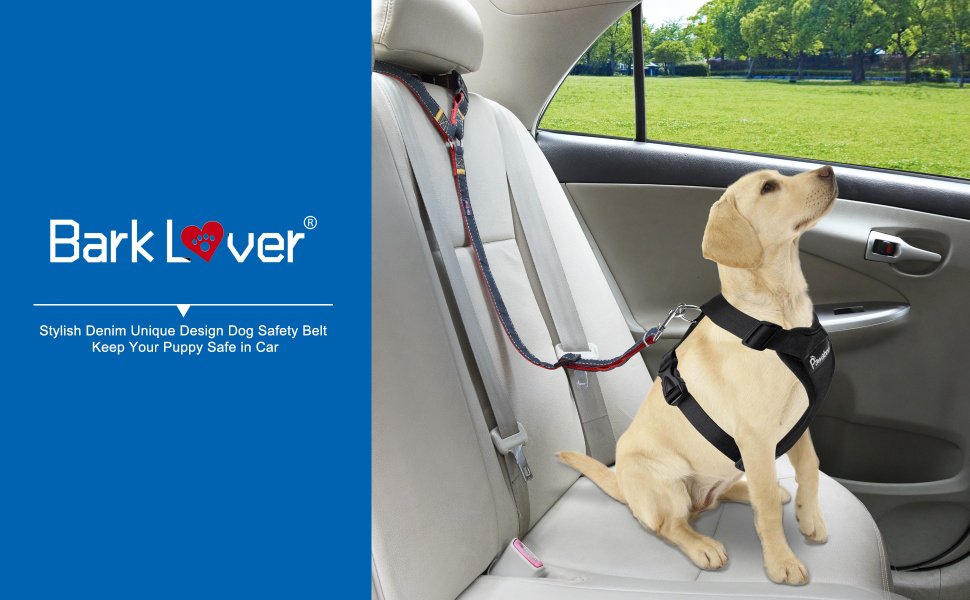dog car seatbelt is necessary for dog owner who love to regular road trip, keeping  dog safe in car