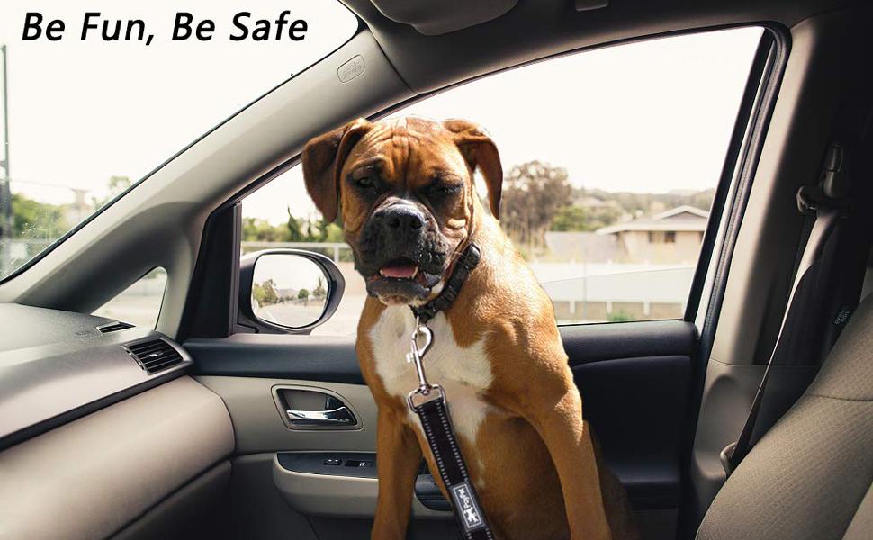 dog leash with seat belt