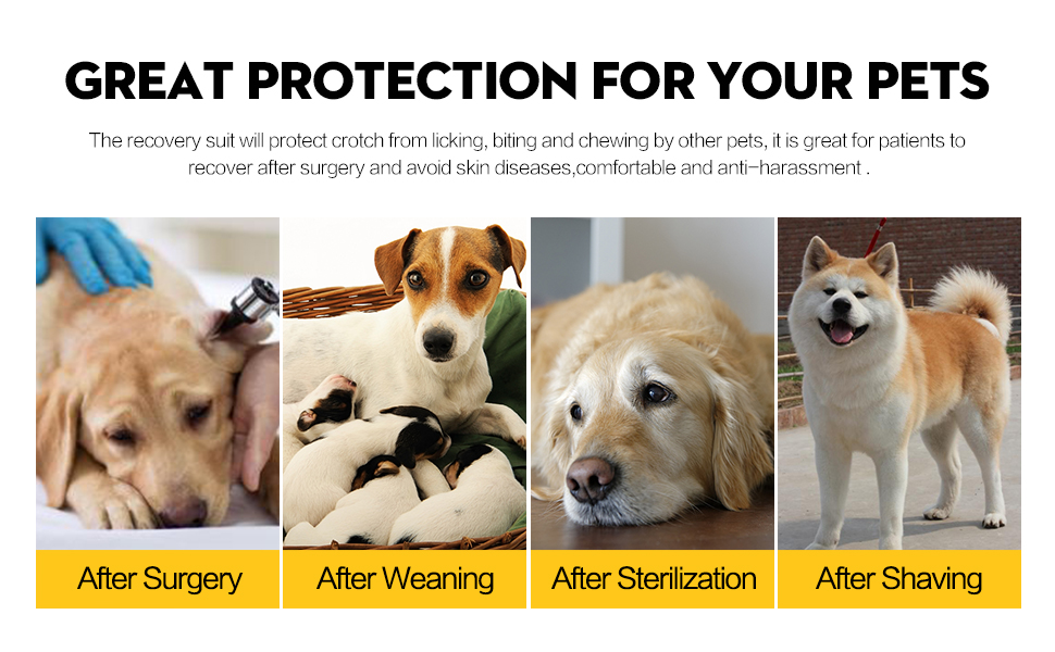 Combinaison de récupération chirurgicale pour chien