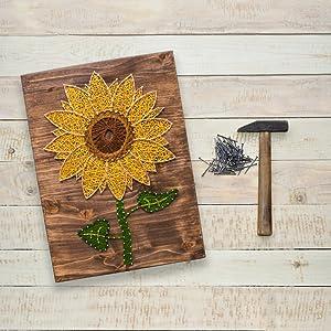 sunflower stock 2