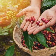 Ethiopian Yirgacheffe coffee farmer