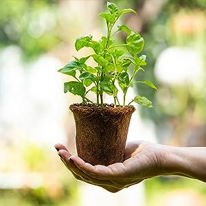SPN-ONL, cocopeat for plants, fertilizers for plant, cocopeat, Gocoir, cocopeat powder for gardening