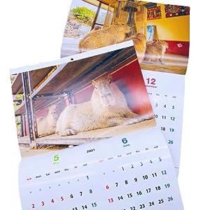 伊豆シャボテン本舗 カレンダー 2021年 カピバラ 伊豆シャボテン動物公園&野生 マステ付き