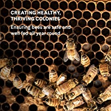 Bee colonies manuka honey