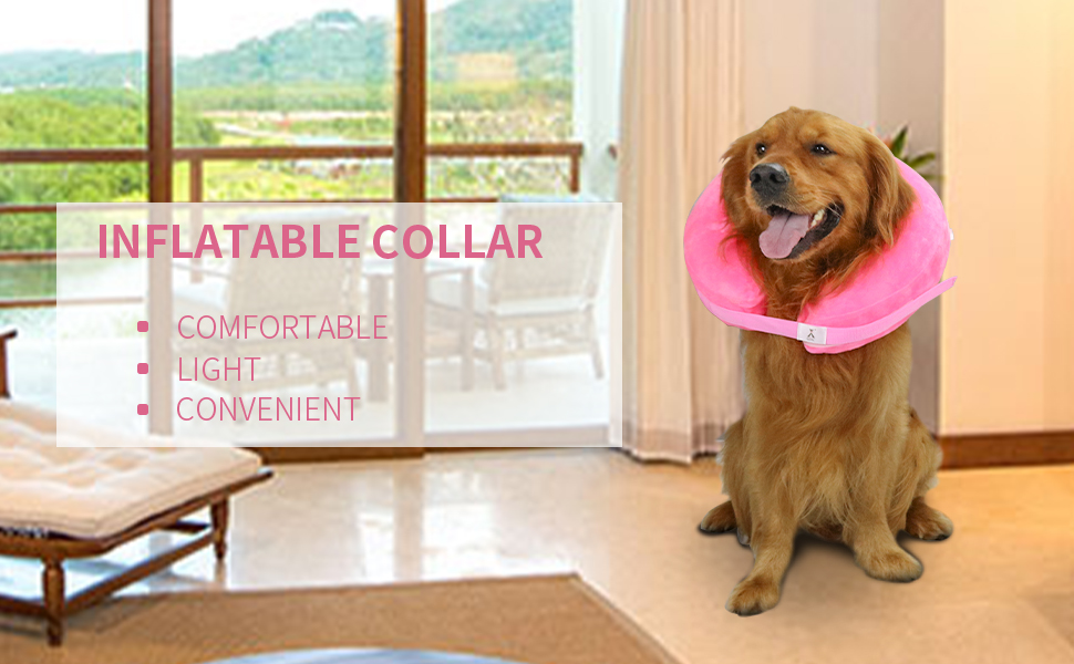 inflatable dog cone
