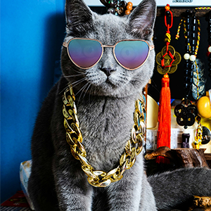 A cat wearing the cat sunglsses and the cat chain necklace.