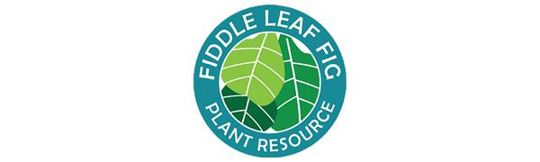 Fiddle Leaf Fig Plant Resource, Premium Fiddle Leaf Fig Potting Soil, Fiddle Leaf Fig Potting Soil