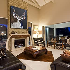 greater kudu living african room staging