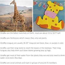 Giraffe Fact card