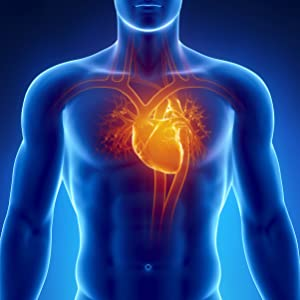 Graphic of human body with emphasis on the heart