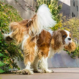 unwanted urination dog natural product