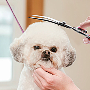 dog hair scissors