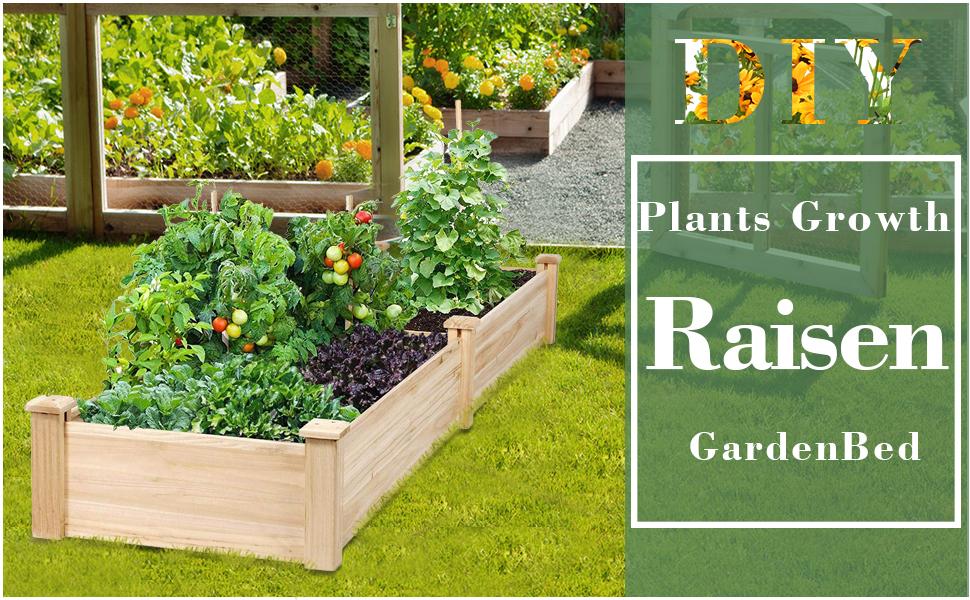 planter raised beds