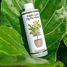 Fiddle Leaf Fig liquid Fertilizer