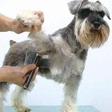 trim the long hair
